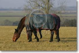 Outdoor Rugs For Horses Bob Langrish Equestrian Photographer Images