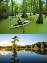 Louisiana Natural Attractions images 10 amazing camping spots in louisiana are an absolute must see jpg