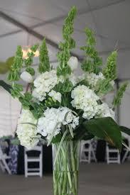 35 best indoor plants melbourne images on pinterest melbourne