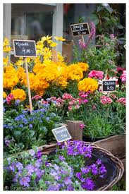 flower places 504 best flowers and flower shops images on flowers