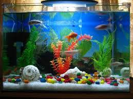 best 25 modern fish tank ideas on amazing fish tanks