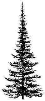 196f pine tree