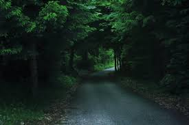 forests trees path dark road deep forest scenery wallpapers