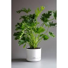 mr kitly self watering plant pot 25cm white plantandpot nz