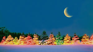 winter outdoor christmas trees xtree xmas new year colorful