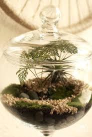 24 best terrário images on pinterest models plants and gardening