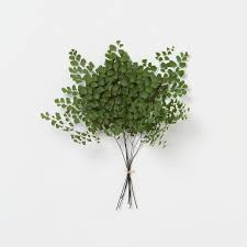 adiantum fern bunch in house home home décor room accents plants