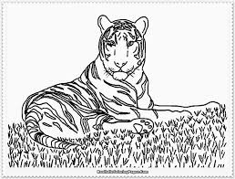 marvelous coloring pages tigers wallpapers