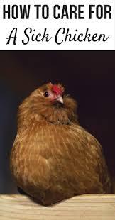 best 25 meaning of flock ideas on pinterest freedom bird