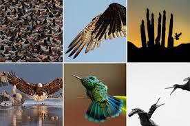 Vermont how do you spell travelling images Audubon photography awards traveling exhibit audubon vermont jpg