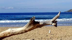 Washington beaches images How to collect driftwood on washington beaches our pastimes jpg