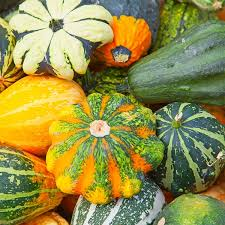 gourds decorative seeds mix ornamental squash gourd seeds