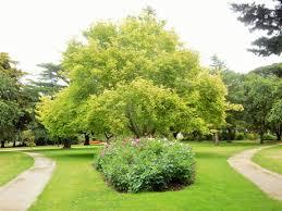 colac botanic gardens melbourne