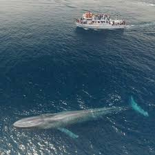 Boat Meme - put me like 盞 a blue whale swimming beside a 75ft boat