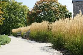 landscaping with grasses for home surroundings the home