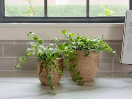 low light houseplants plants that don t require much light must see low light houseplants plants that dont require much light