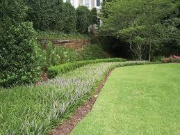 backyard garden with grasses and liriope ground cover liriope
