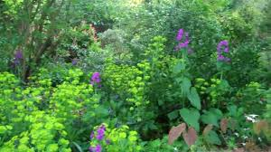 the woodland garden in full bloom april 2010 youtube