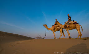 thar desert animals camel safari in india u0027s thar desert part 2 a nomadic existence