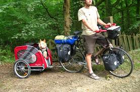 afghan hound saddle 5 things to do before cycling with your dog dogbuddy blog
