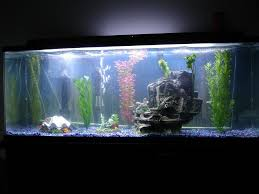 saphiregoddess17 s freshwater tanks photo id 2179 version