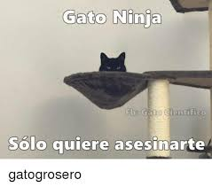 imagenes groseras de gatos 25 best memes about gato gato memes