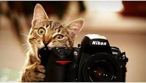 tutorial fotografi landscape tips fotografi pemula belajar fotografi pemula tips trik