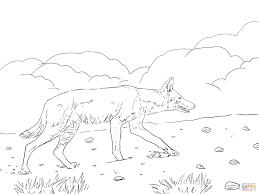 african ethiopian wolf coloring page free printable coloring pages