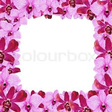 purple orchid flower purple orchid flowers border design stock photo colourbox