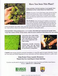 native plants to texas harmful non native plants