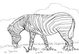 free coloring pages boys girls animals horses zebras