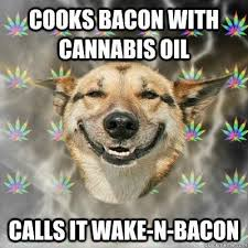 Dog Bacon Meme - cooks bacon with cannabis oil calls it wake n bacon stoner dog