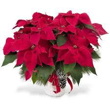 christmas plants christmas plants planters montgomery oswego yorkville