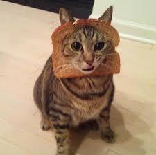 Cat Breading Meme - breaded cats cats wearing bread photos cats wearing bread