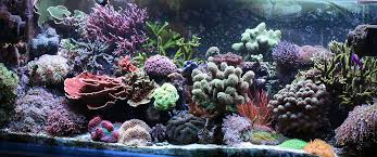 introduction to fragging corals