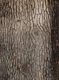 tree bark texture 2 by photographyflower on deviantart