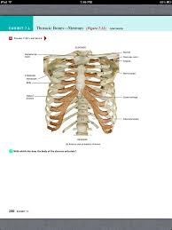Human Physiology And Anatomy Book 29 Best Anatomy And Physiology Images On Pinterest Axial