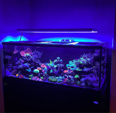 t5 lighting fixtures for aquariums 300dd lighting options reef central online community