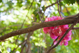 mexican green tree snake tulum mexico where to willie