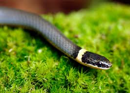 stay safe around snakes but let them do their job mississippi