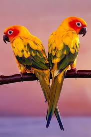 wallpaper with birds birds wallpaper android apps on google play