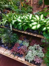 Breezewood Gardens Chagrin Falls - photos for breezewood gardens u0026 gifts yelp