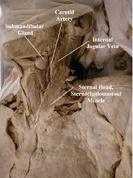 Anatomy Of Human Back Muscles Back Muscles Anatomy Human Anatomy Chart