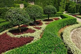 small ornamental formal garden trees