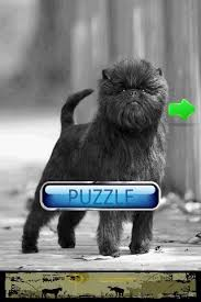 affenpinscher youtube dog puzzle affenpinscher android apps on google play