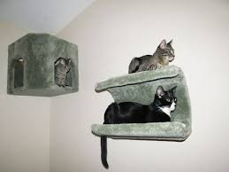 cat wall furniture wall shelves design gorgeous wall mounted shelves for cats wall