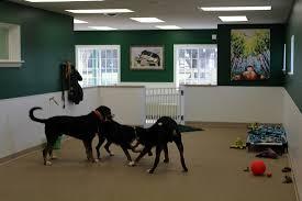 photos of our facility seneca pet care