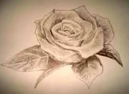 how to draw beautiful drawing 40 best beautiful roses images on drawing