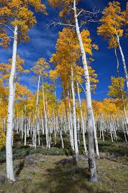 Utah forest images Fishlake national forest home jpg