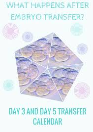 what happens after embryo transfer day 3 u0026 day 5 transfer